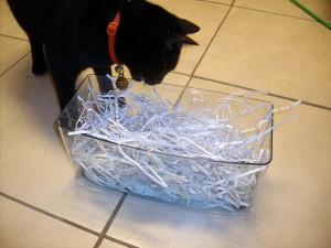 Noche with his shredded paper