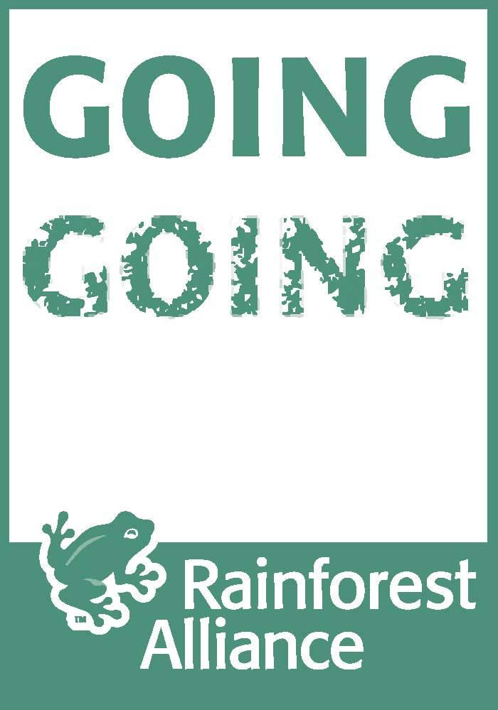rainforest-sticker